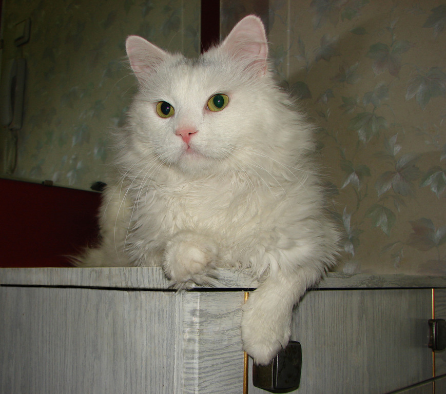 Помойный кот картинки